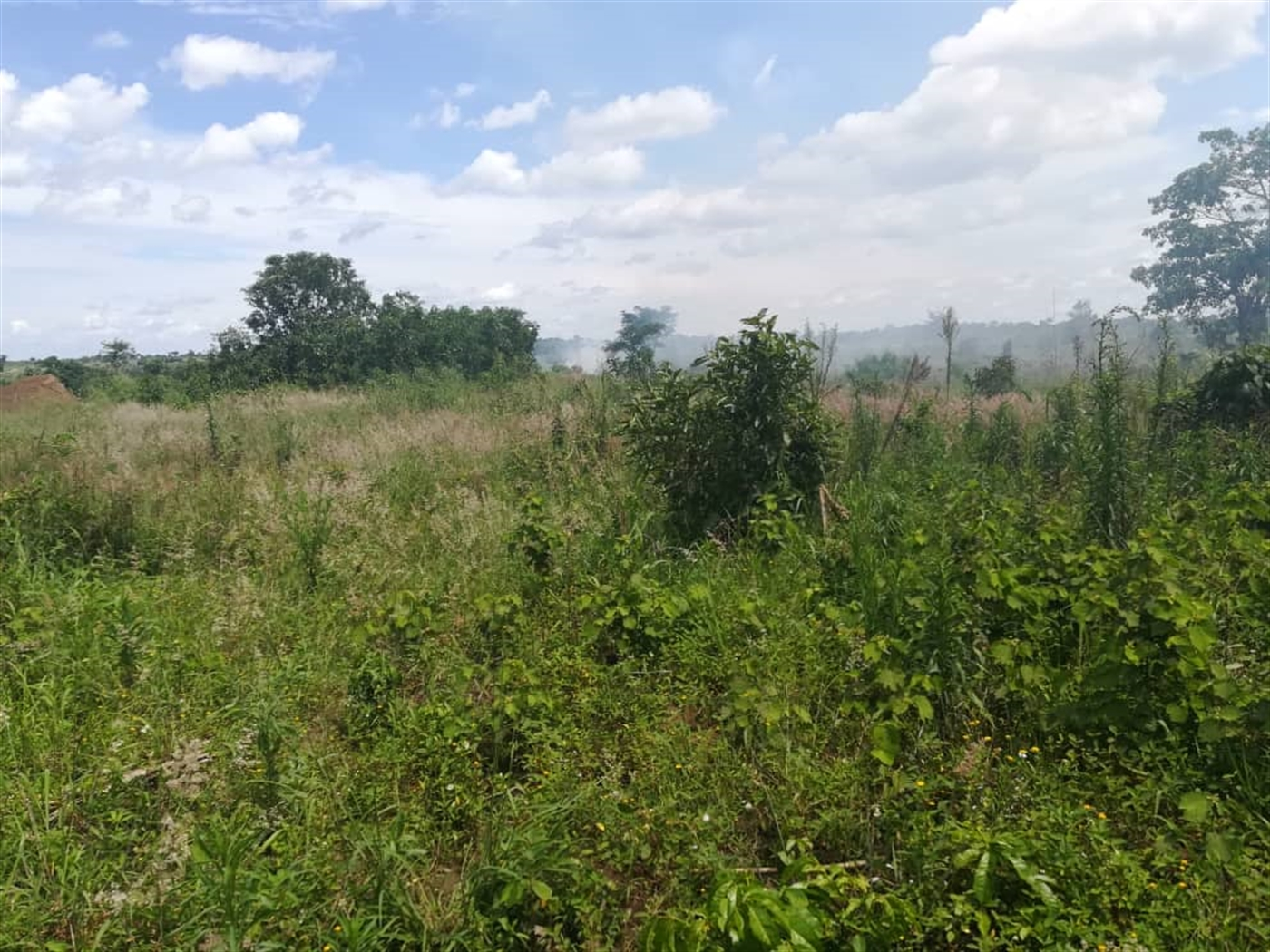 Agricultural Land for sale in Nakisunga Mukono