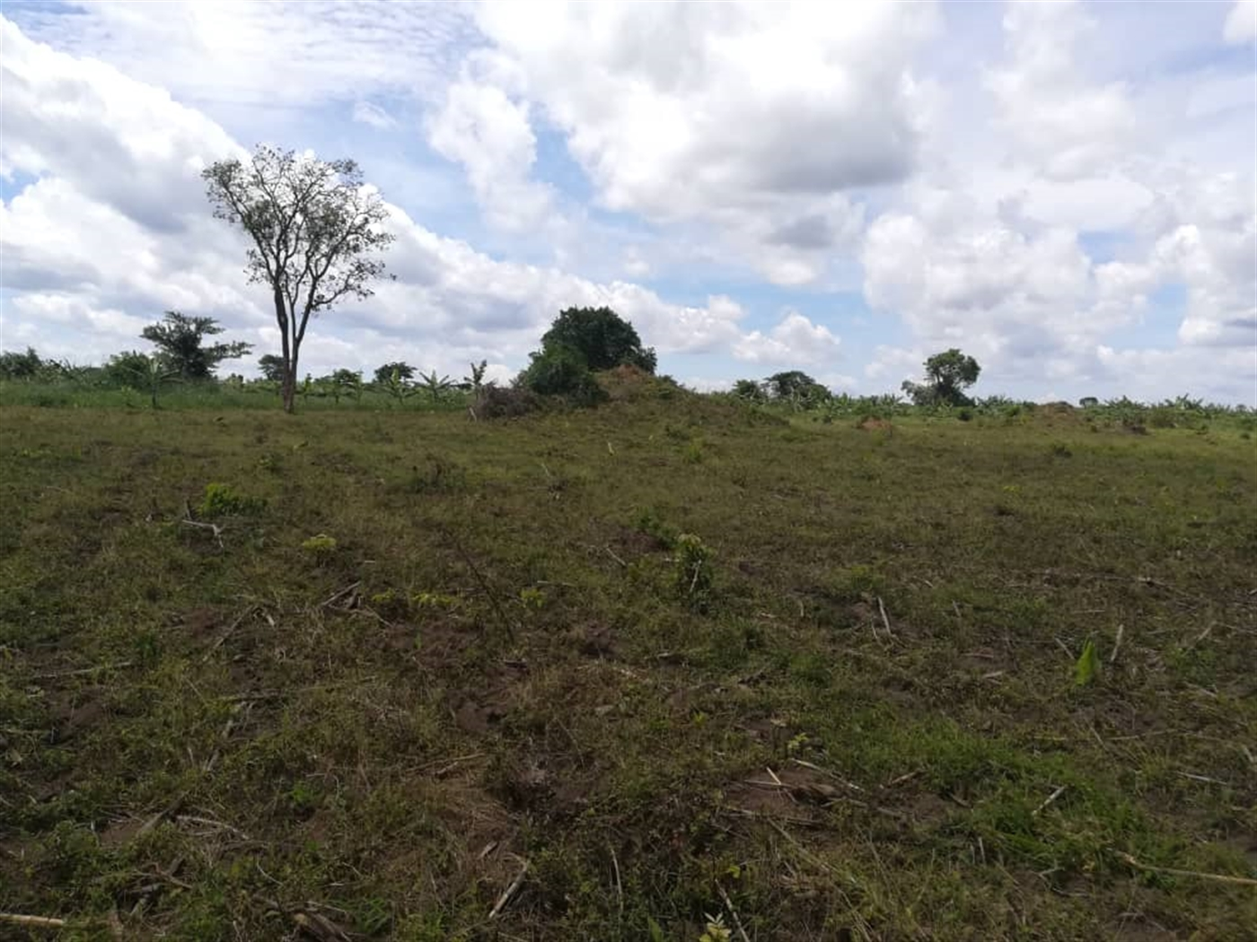 Agricultural Land for sale in Bbaale Kayunga