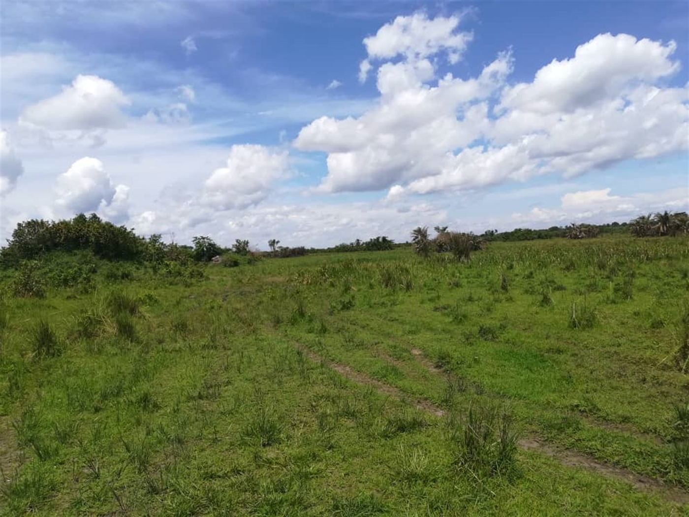 Agricultural Land for sale in Kataigwa Kayunga