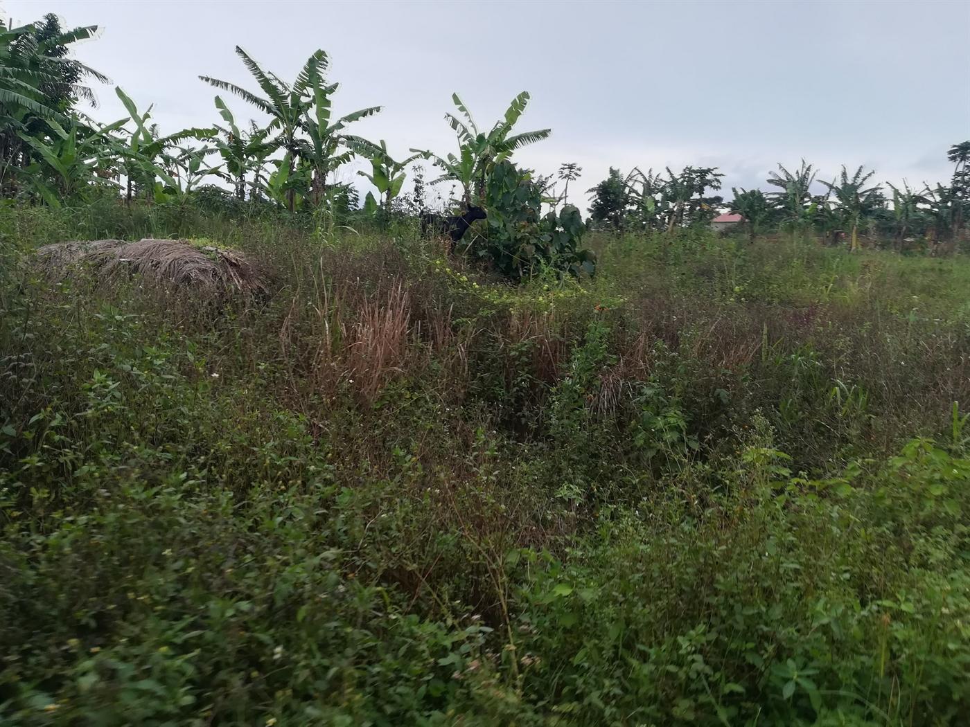 Agricultural Land for sale in Kisoga Mukono