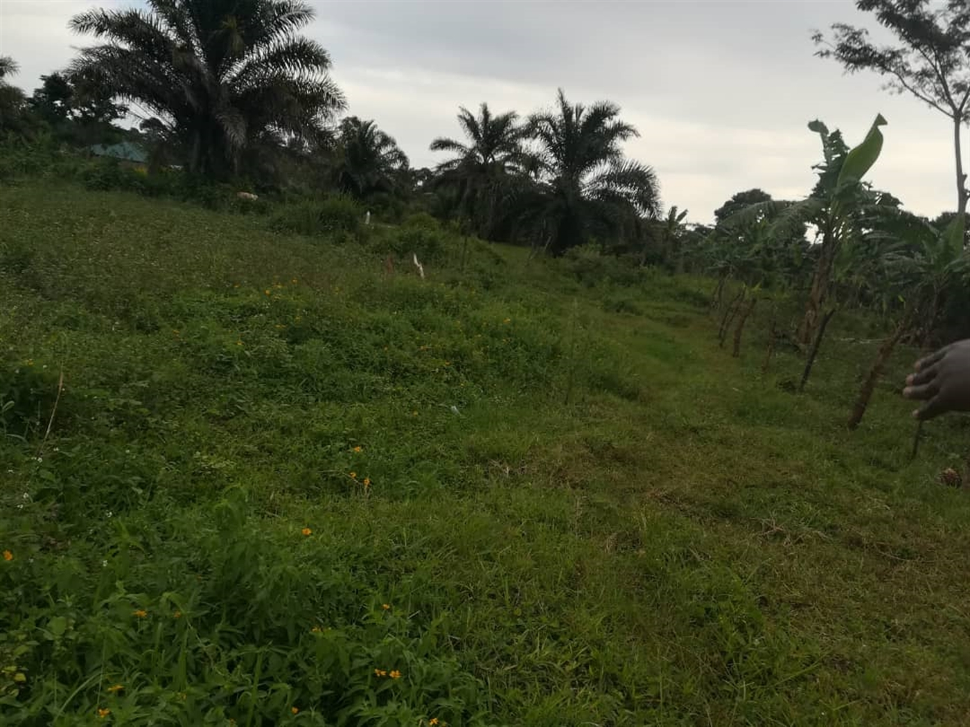 Agricultural Land for sale in Busabaga Mukono