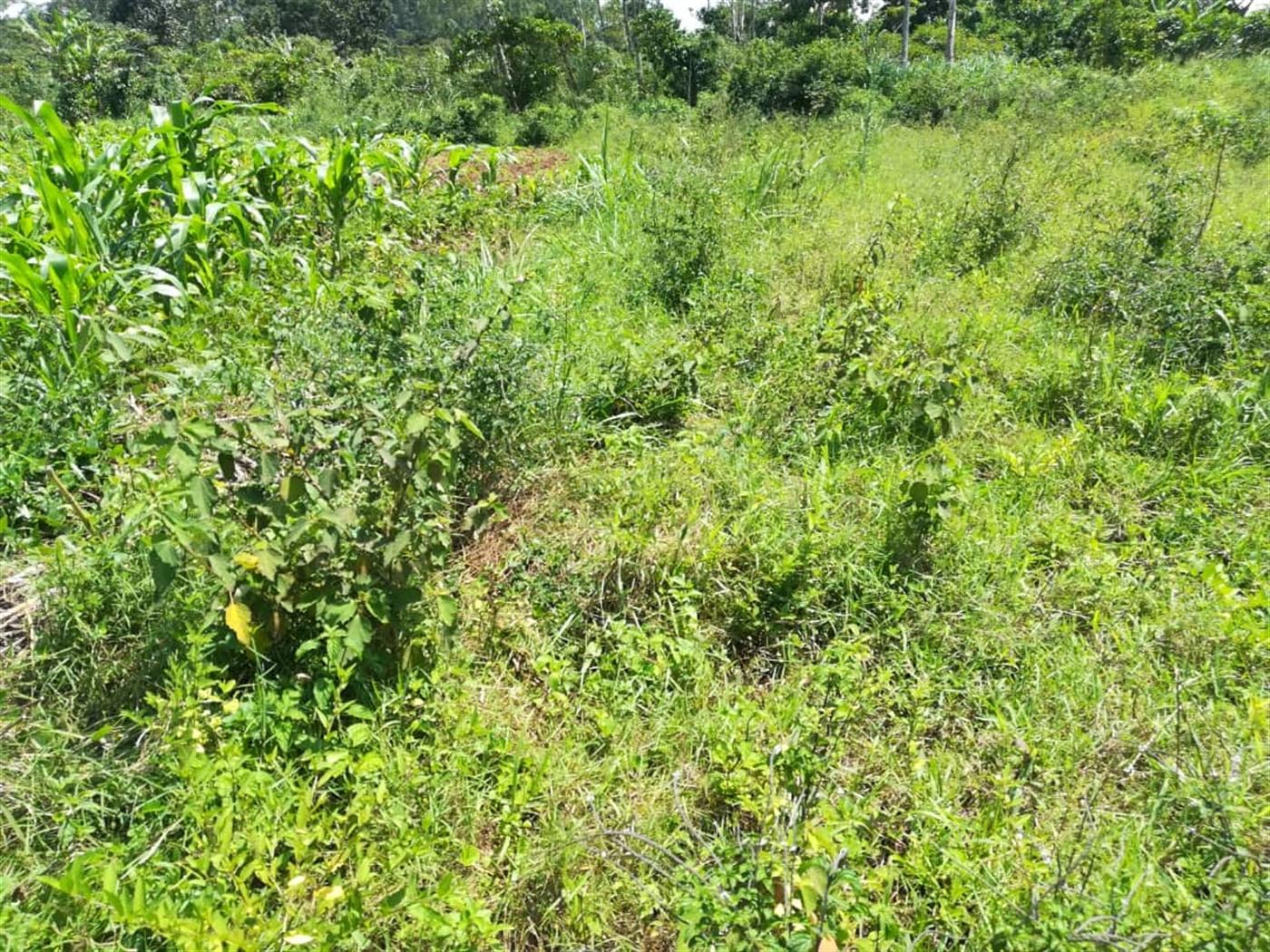 Residential Land for sale in Namuyenje Mukono