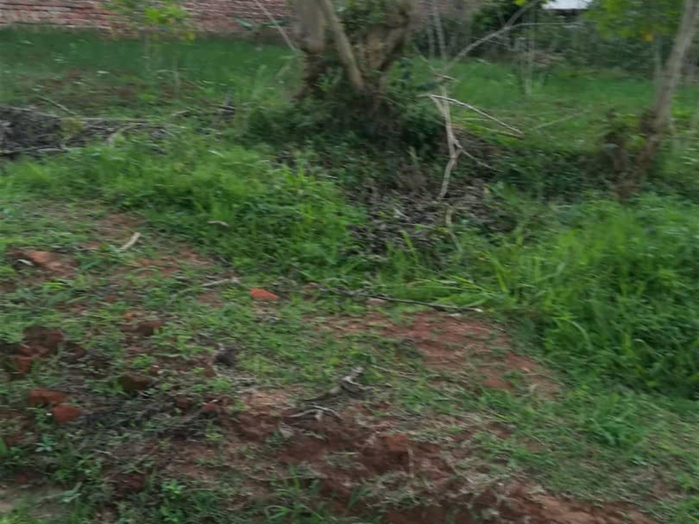 Residential Land for sale in Ntawo Mukono