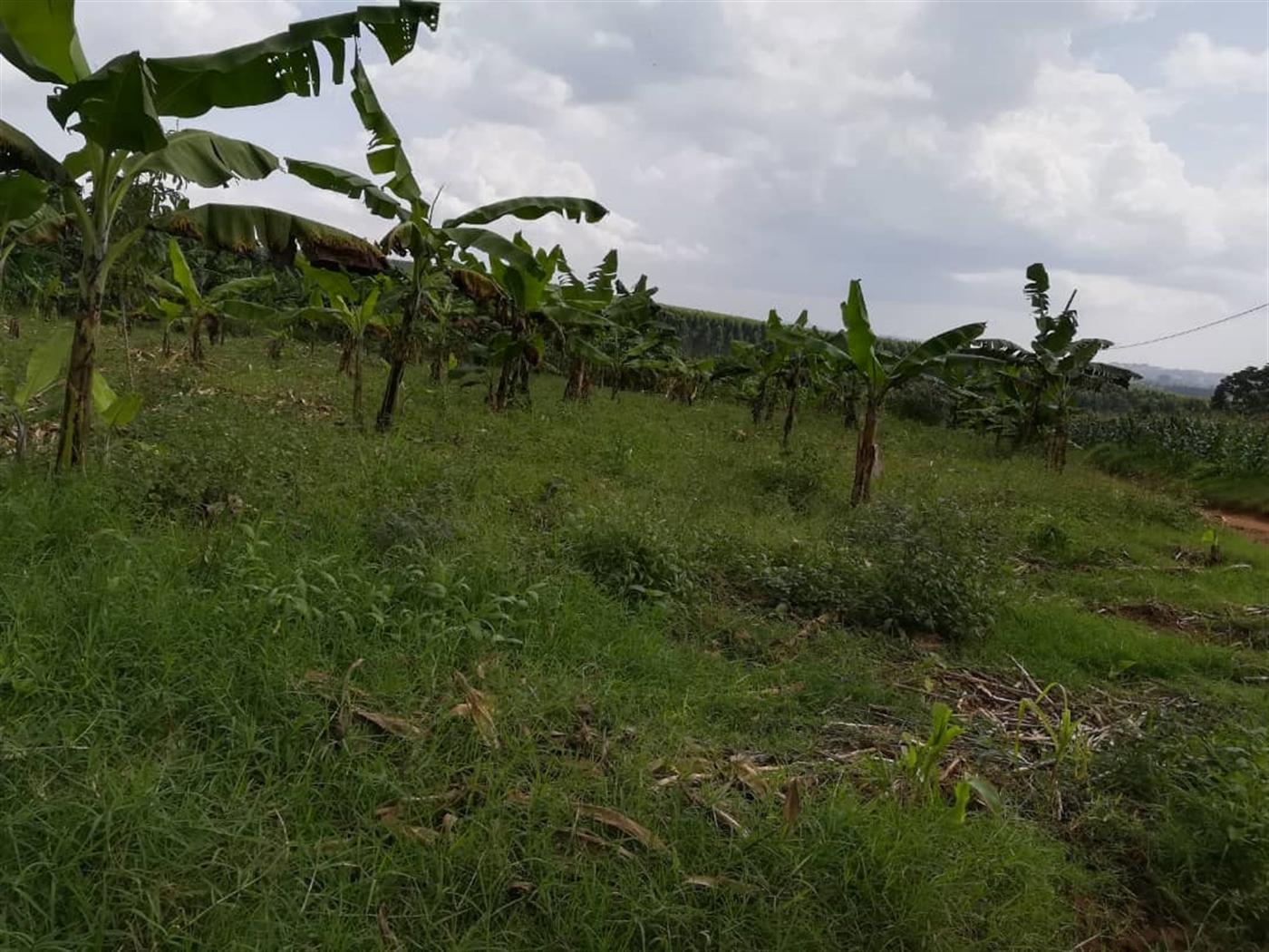 Residential Land for sale in Nabuuta Mukono