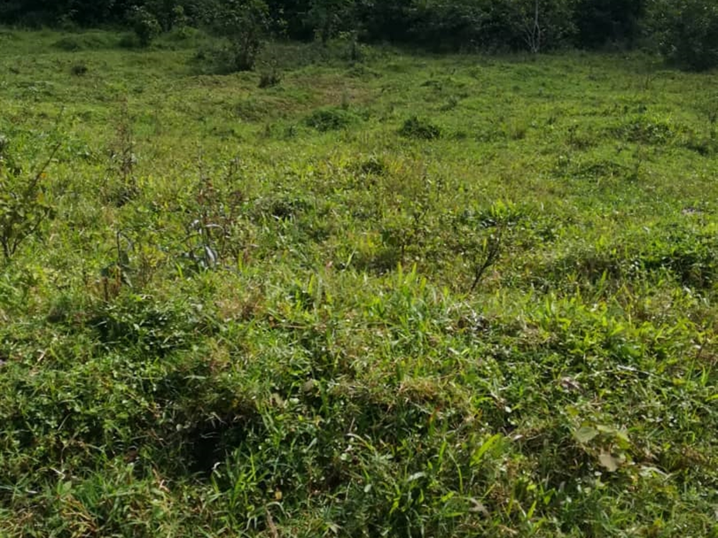 Residential Land for sale in Njerere Mukono