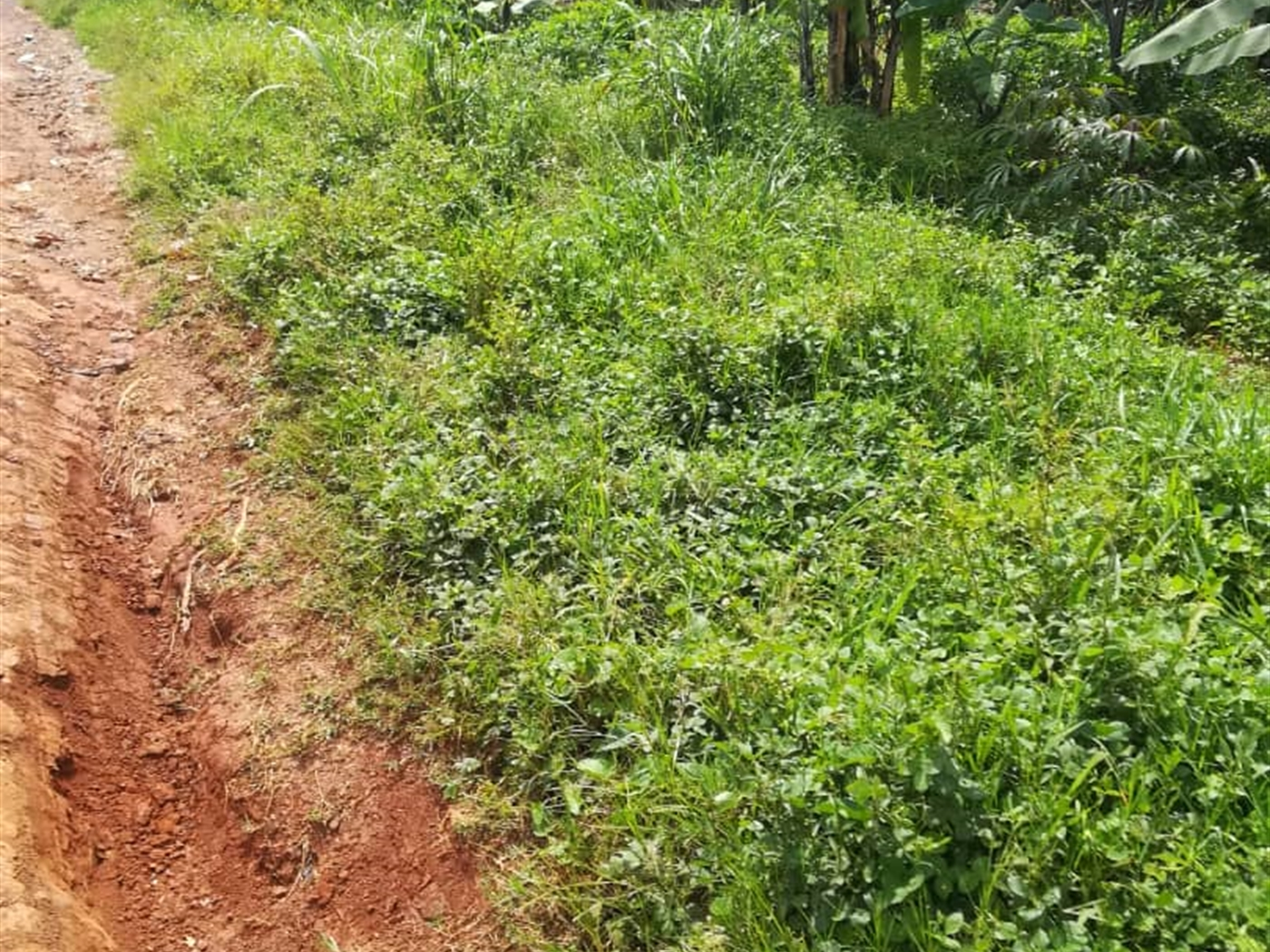 Residential Land for sale in Kigombya Mukono