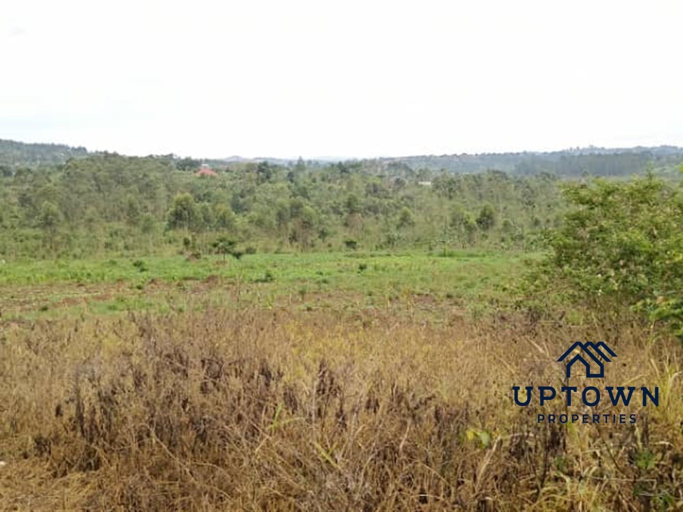 Multipurpose Land for sale in Bukeelele Mukono