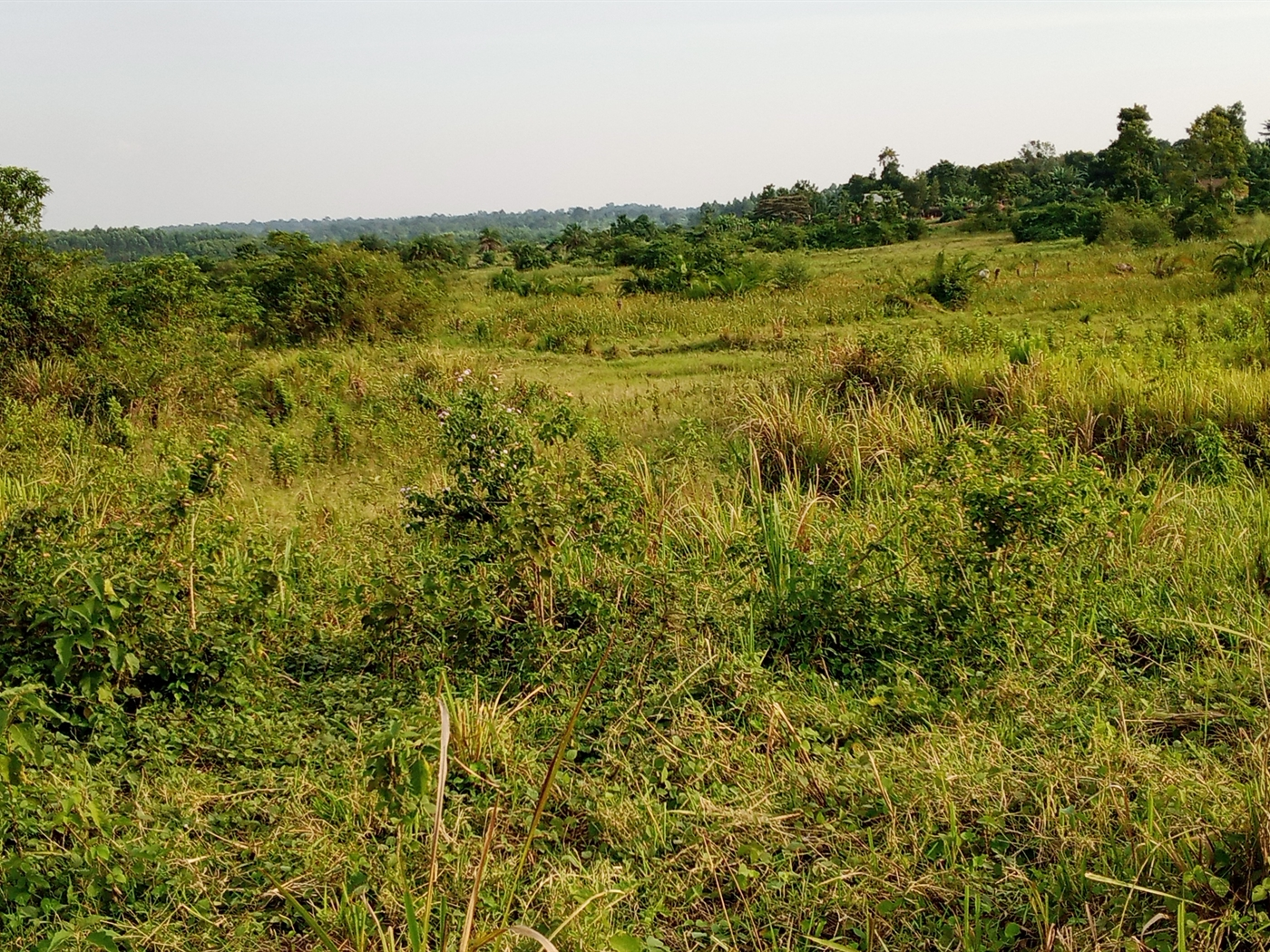 Agricultural Land for sale in Vumba Luwero