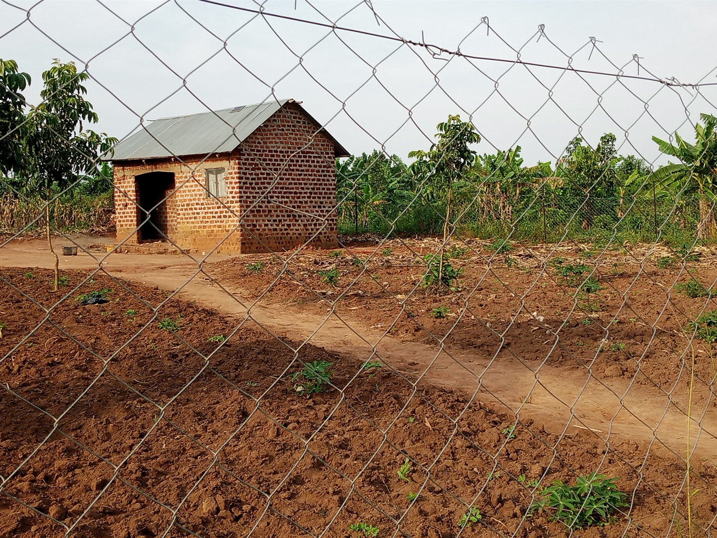 Agricultural Land for sale in Ziloobwe Luwero
