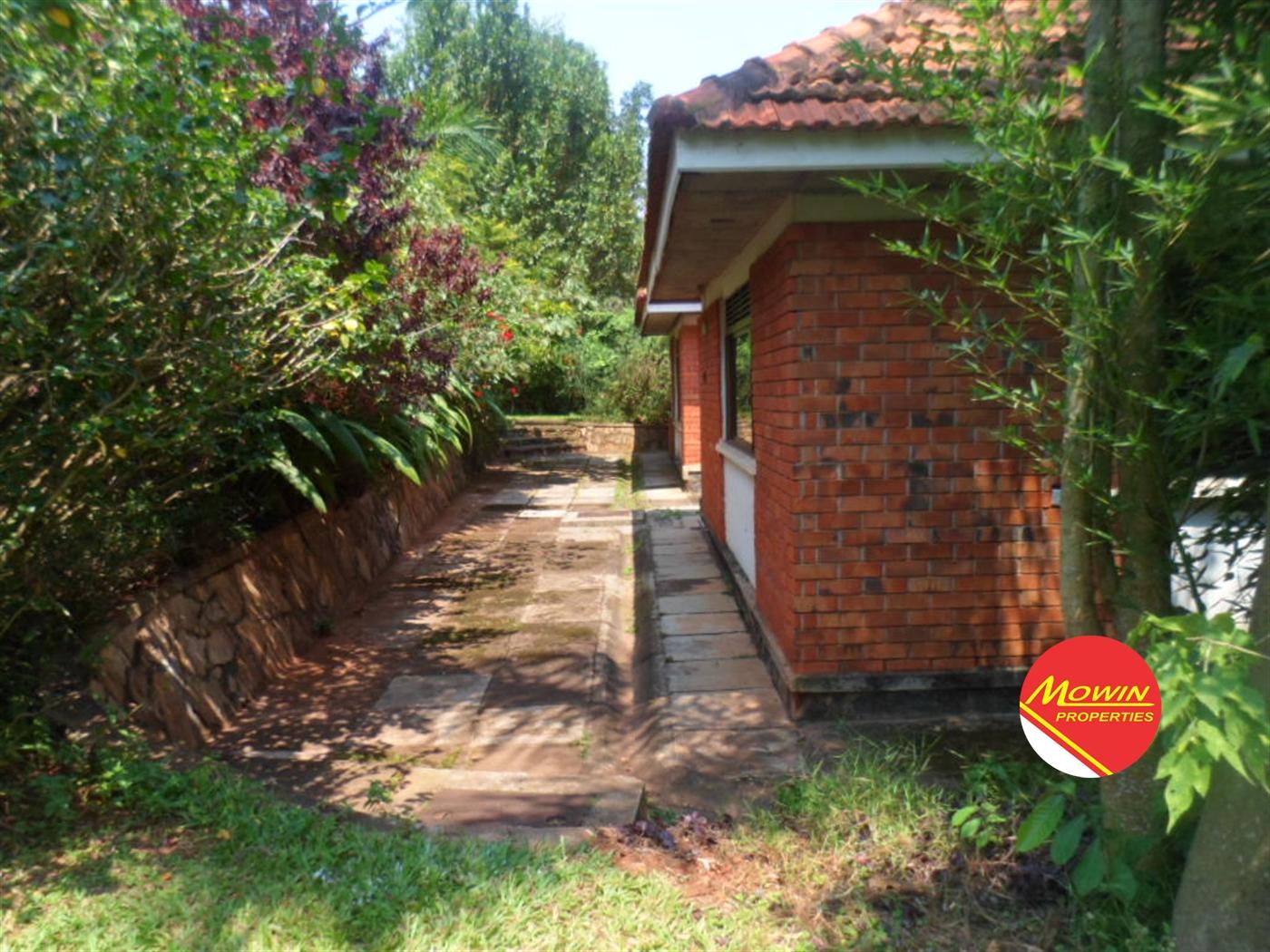 Bungalow for rent in Bugolobi Kampala
