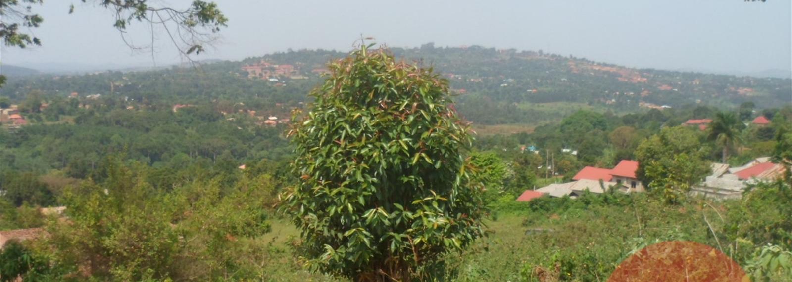 Nakawuka