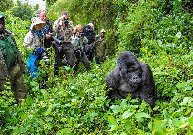 5Days Wildlife and Gorilla tracking safari