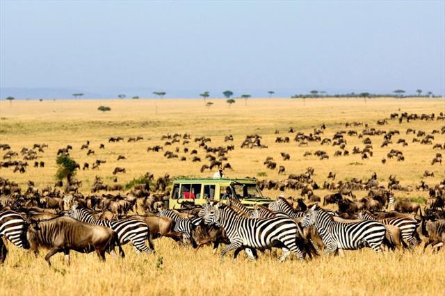 4 Days Kidepo Valley National Park Safari