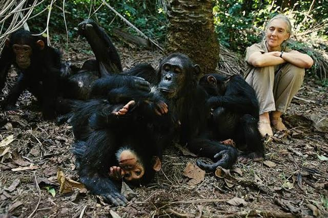 8 Days Primates Safaris