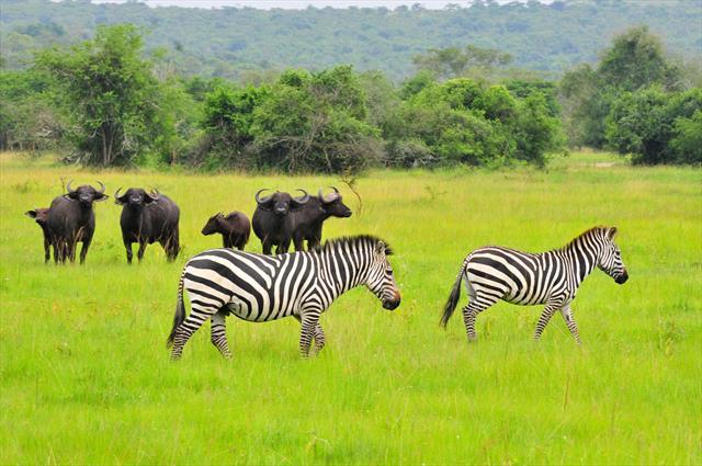 1 Day Lake Mburo NP Safari
